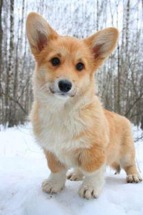 Sooooo cute!!!